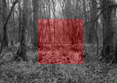 Wytham Experiment #1 (red)