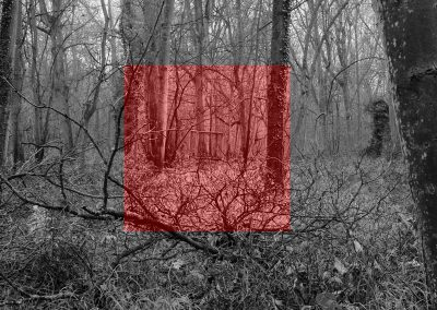 Wytham Experiment #2 (red)