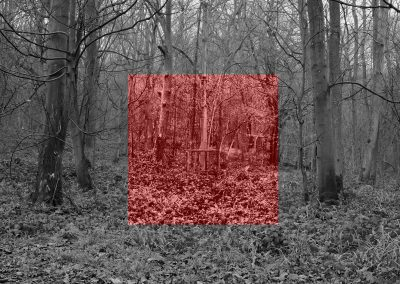 Wytham Experiment #3 (red)